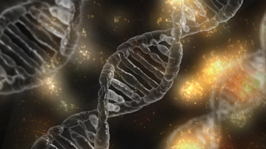 Gene editing is a way of making specific changes to the DNA of a cell.
