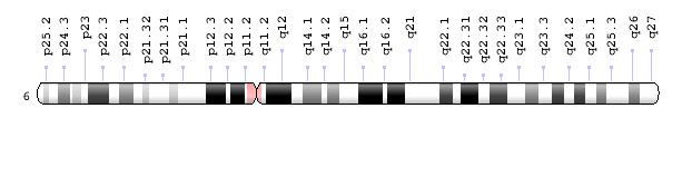 Ideogram of human chromosome 6.